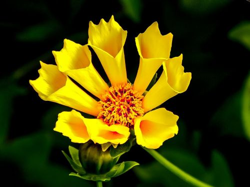 yellow flower yellow flower