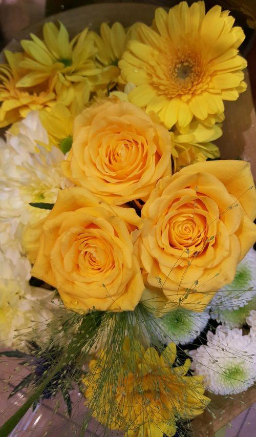 yellow rose bright