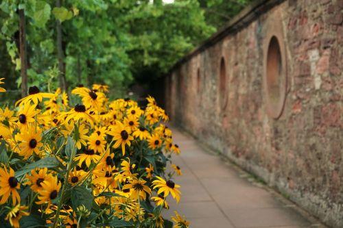 yellow flower aschaffenburg