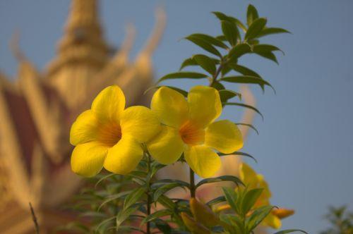 yellow flower flowers
