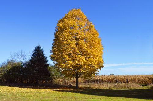 yellow tree orange
