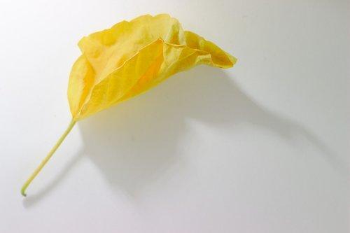 yellow  sheet  autumn