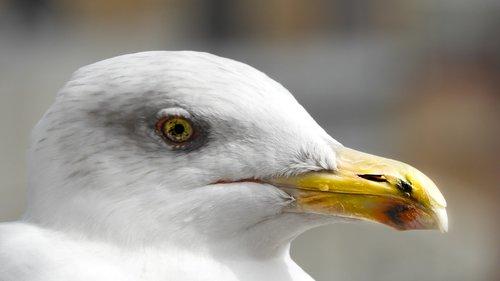 yellow  bird  white