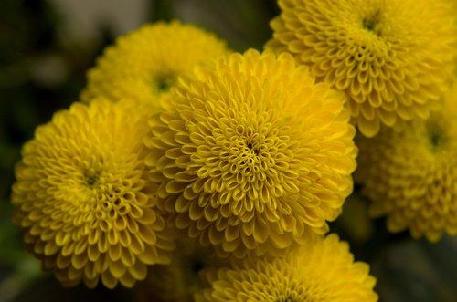 yellow  flower  symmetry