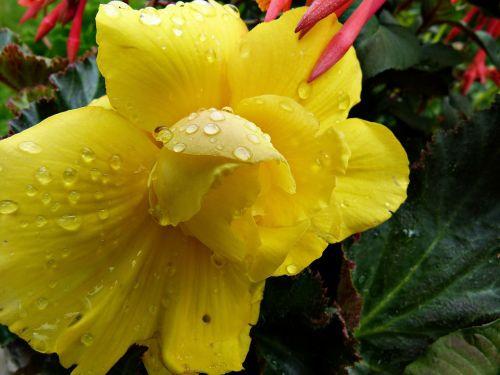 yellow flower rain
