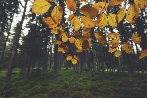 geltona,lapai,medžiai,miškas,miškai,gamta,žolė