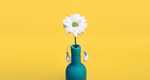 yellow daisy bottle