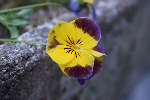 yellow and purple flower nature stems