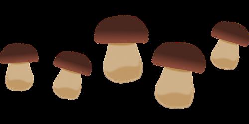 yellow boletus boletus fungus