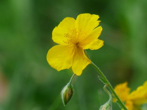 yellow brown flower blossom
