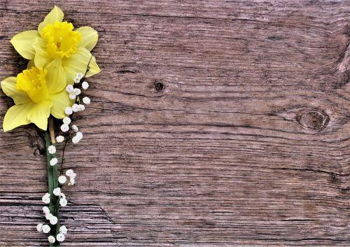 Yellow Daffodils Border