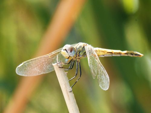 yellow dragonfly winged insect branch