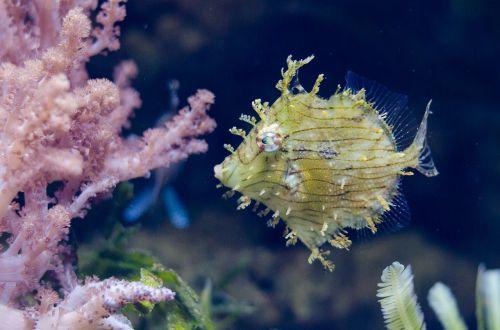 yellow fish exotic coral