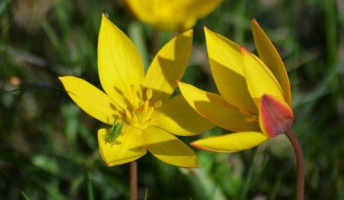 yellow flower yellow flowers yellow