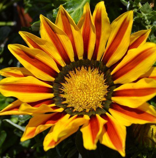 yellow flower sun flower yellow napvirág