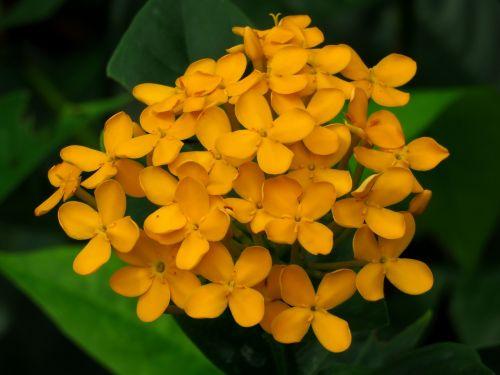yellow flower fresh green leaf