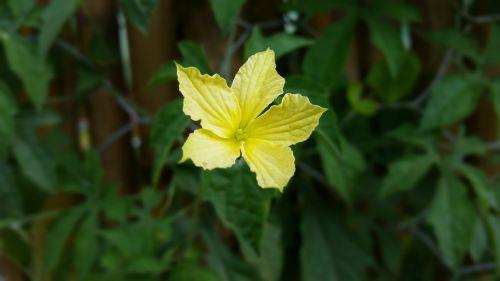 yellow flower flowers nature