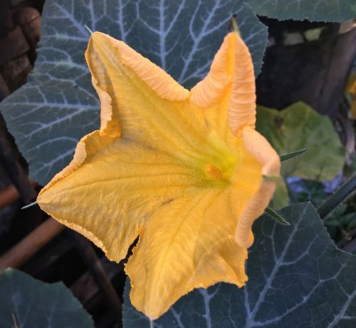 yellow flower petals yellow yellow