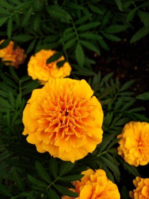 yellow flower  nature flower  beautiful flower