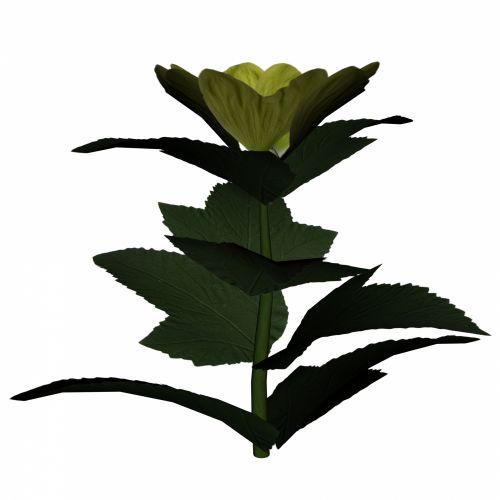 gėlė, pavasaris, balta, geltona, narcizas, dekoratyvinis, daffodil, jonquil, Iš arti, izoliuotas, apdaila, niekas, gėlių, žiedlapis, lapai, sepal, žiedas, dovanos, objektas, stiebas, žiedynas, sodas, augalas, grožis, elegancija, gražus, fonas, gamta, botanika, geltona gėlė ii