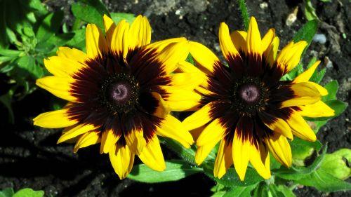 gėlė, gėlės, rožė, rožės, flora, augti, auga, sodas, sodai, krūmas, krūmai, sodininkystė, sodininkystė, žalias, augalas, augalai, botanikos, botanikos, geltonos gėlės