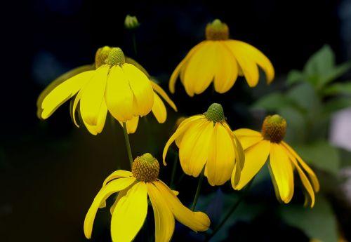 yellow flowers sorrow summer evening