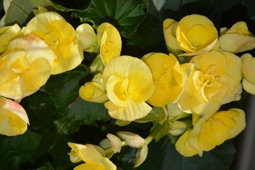 yellow flowers jardiniere nature