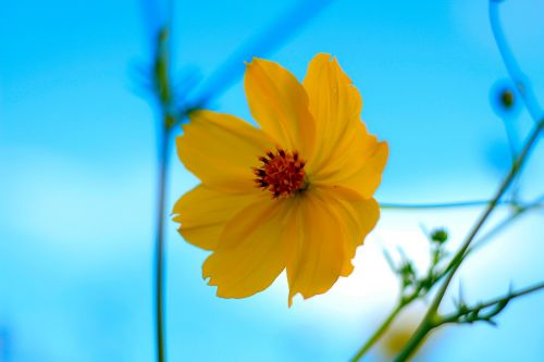 yellow flowers starburst nature