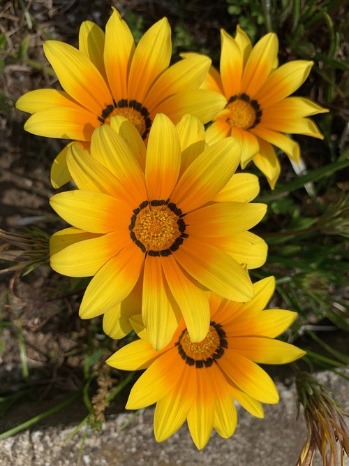 yellow flowers  roadside flowers  floret