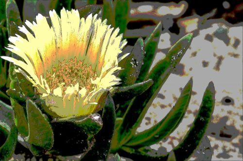 Yellow Ice Plant Flower