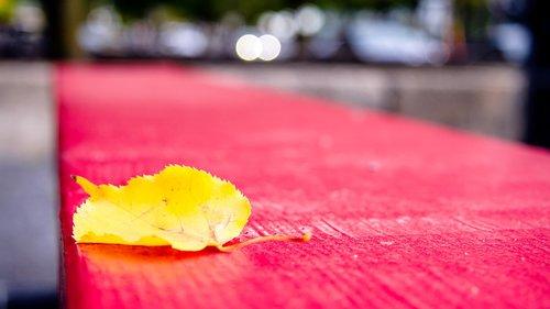 yellow leaf  leaf  nature