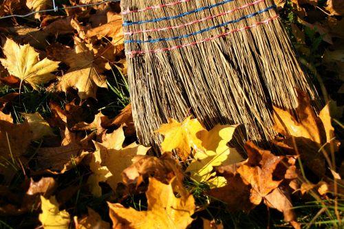 yellow leaves autumn gold autumn