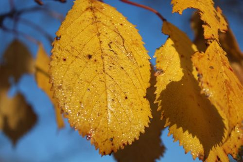 yellow leaves autumn autumn gold