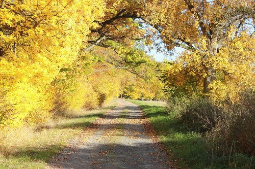 yellow leaves  autumn  gravel road