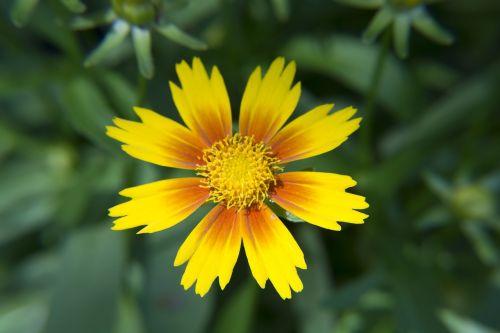 yellow orange flower bloom garden orange