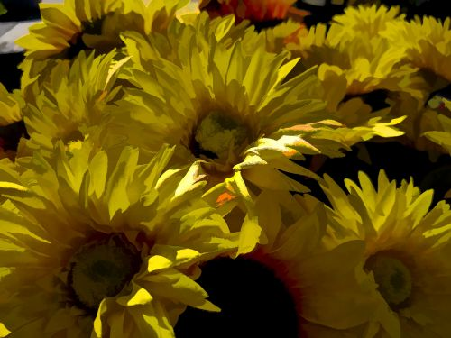 Yellow Painted Sunflowers