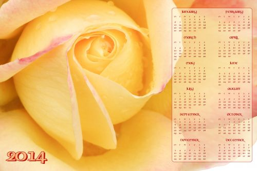 Yellow Rose Calendar 2014