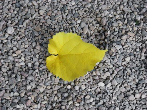 yellow sheet gravel autumn