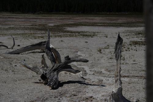 Yellowstone Mud Flat