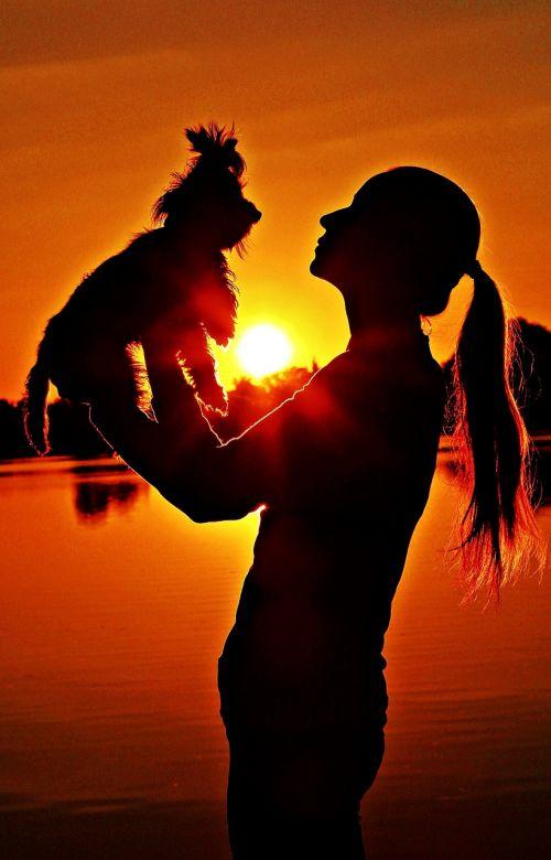 yorkie,moteris,siluetas,saulėtekis,meilė,Draugystė