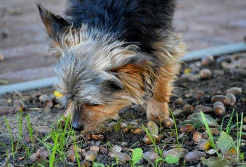 yorkshire  dog  walk