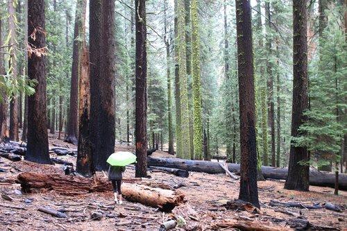 yosemite  national park  wood