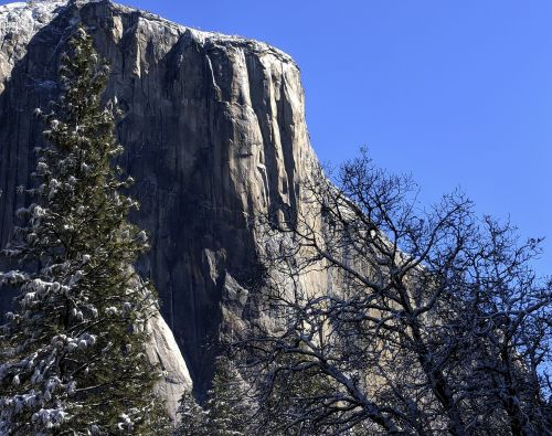 Yosemite Cliff And Trees