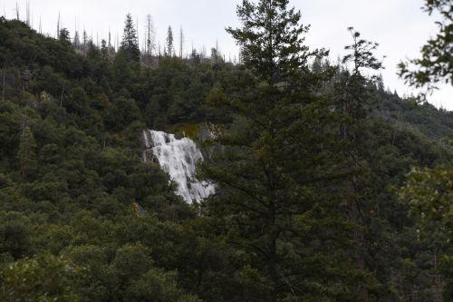 Yosemite Waterfall And Trees
