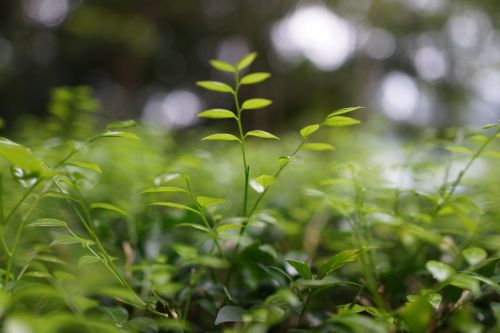 young shoots growth struggle