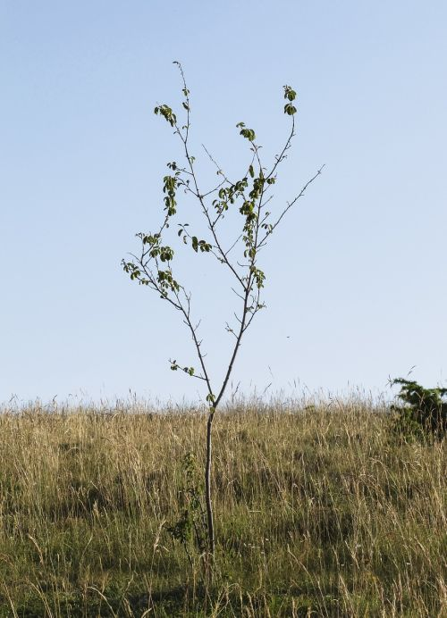 young tree branches lean