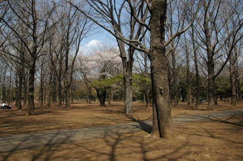 yoyogi park tokyo metropolitan area shibuya