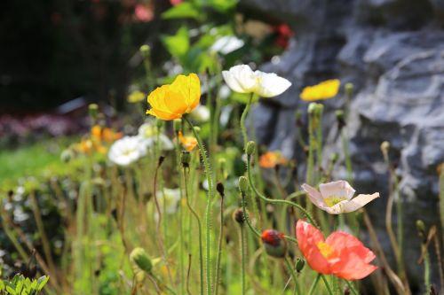 yu beauty flower park