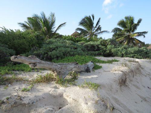yucatan palms beach