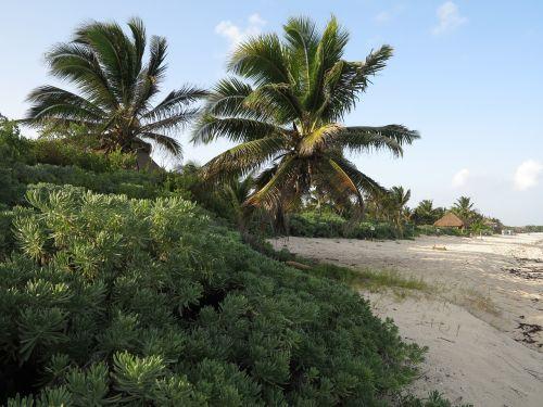 yucatan palms beaches